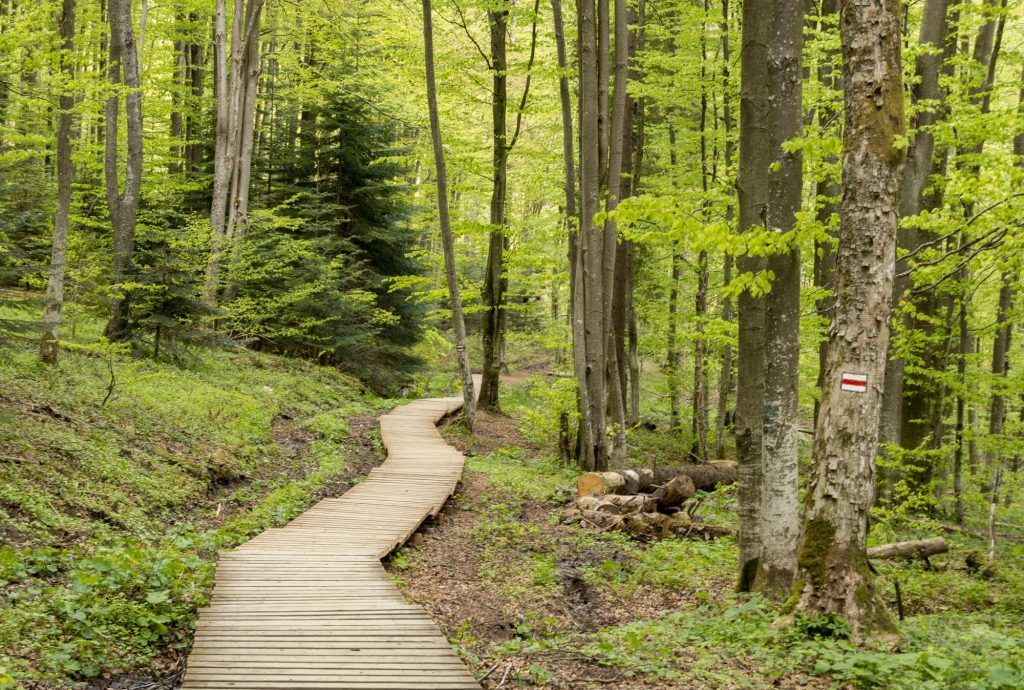 Szlak na Tarnicę z Ustrzyk Górnych