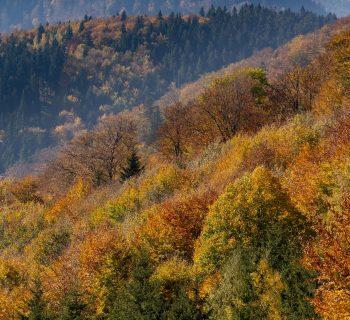 Gdzie pojechać jesienią w Polsce? 12 pomysłów na weekend i nie tylko!